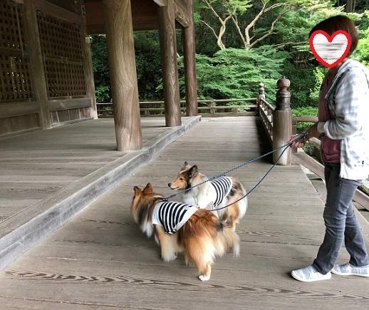 妙本寺散歩3