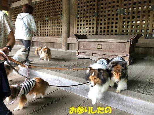 妙本寺散歩4