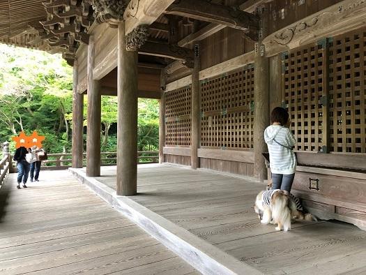 妙本寺散歩5