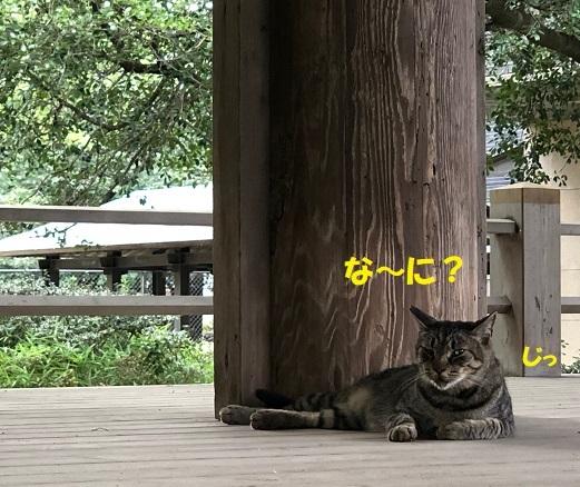 三嶋大社6