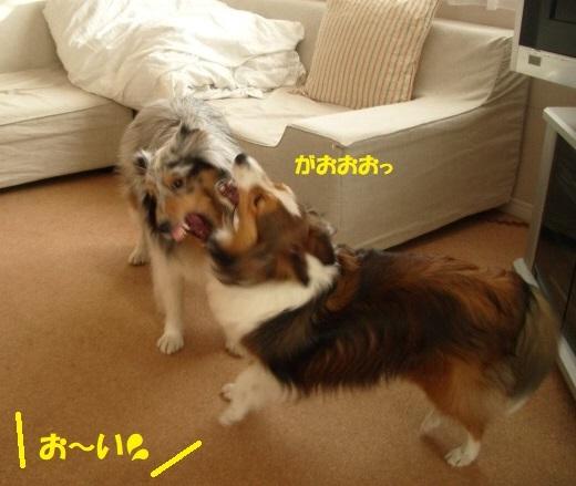 動物愛護4