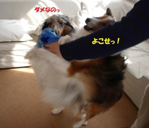 動物愛護7