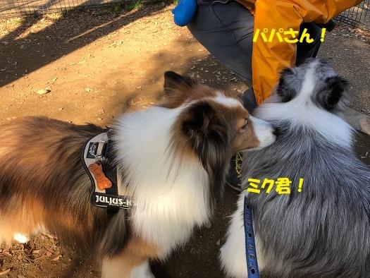 SSKK7.jpg