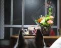 いただいた花をしーと愛でる