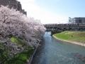花のマンション桜