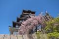 伏見城と桜