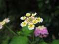 この花の名は知らぬ