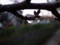 冬の枝先2