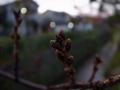 冬の枝先1