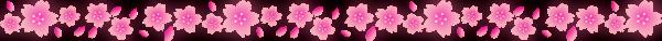 桜のライン
