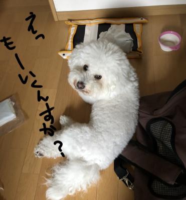 BCiwate4_tokio1.jpg