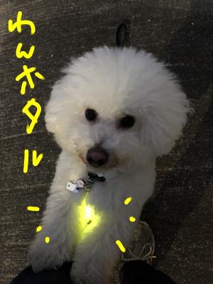 BClightup.jpg