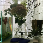 glass_plants3