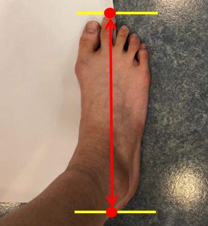 足の大きさ