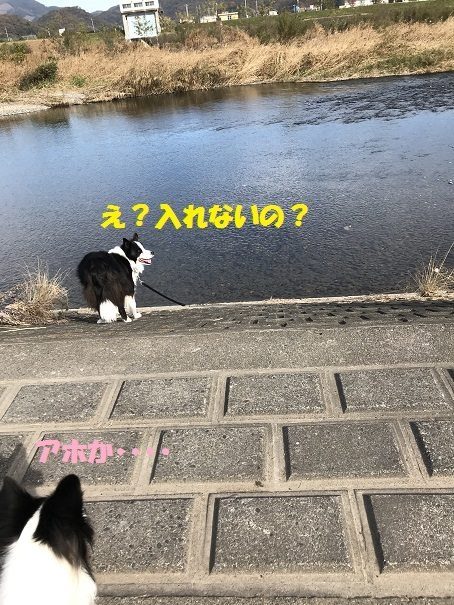 IMG_5733_2018113019513853b.jpg