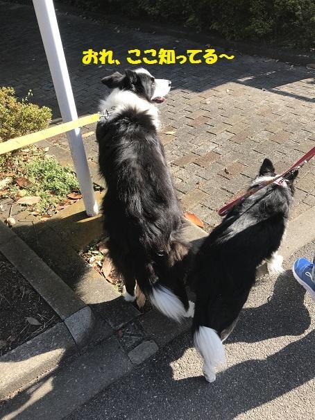 IMG_5748_201812011924460e4.jpg