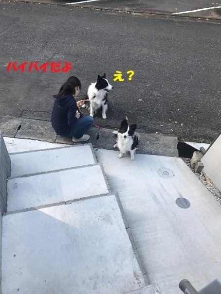 IMG_5759_201812021951568ce.jpg
