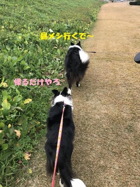 IMG_5863_20181208195048a7f.jpg