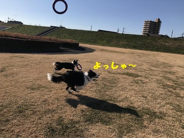 IMG_6746_20190105230914bbb.jpg
