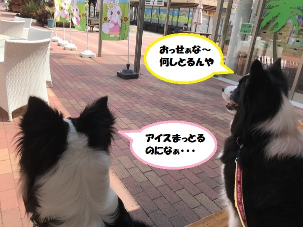 IMG_9509.jpg