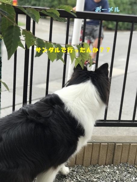 IMG_E0144.jpg