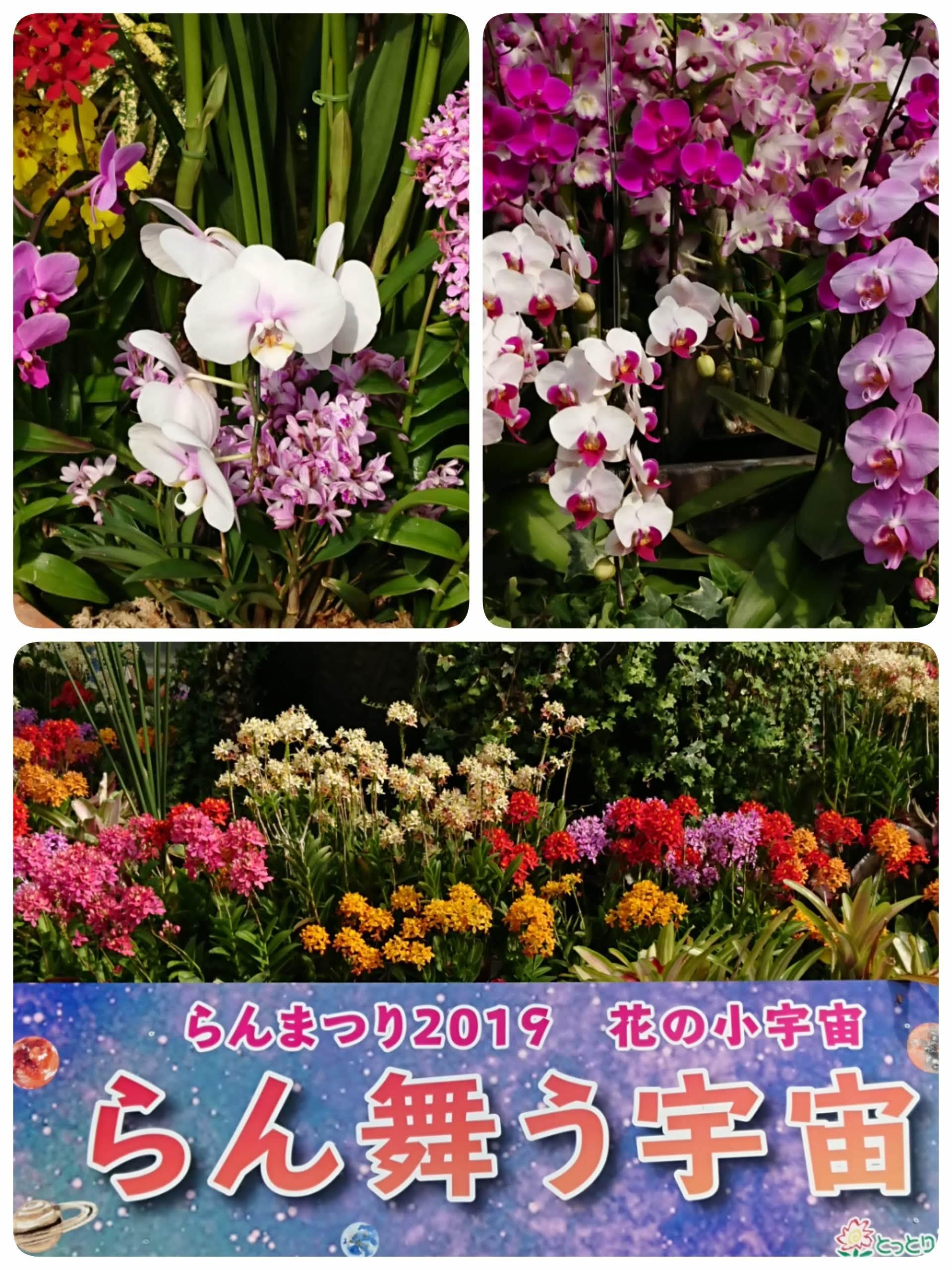 19-03-31-21-07-25-132_deco.jpg