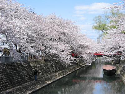 船町湊 桜