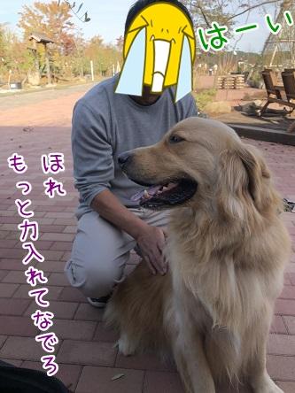 kinako10464.jpeg