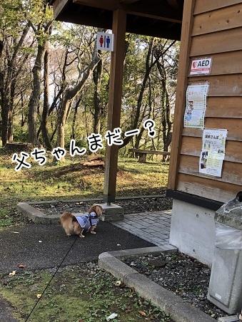 kinako10468.jpeg