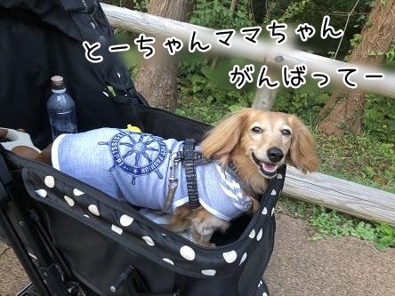 kinako10471.jpeg