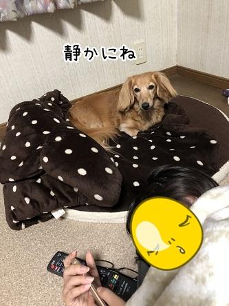 kinako10473.jpeg