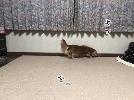 kinako10479.jpeg