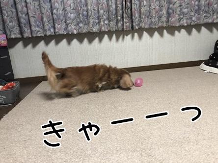 kinako10482.jpeg