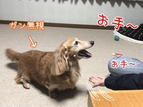 kinako10487.jpeg
