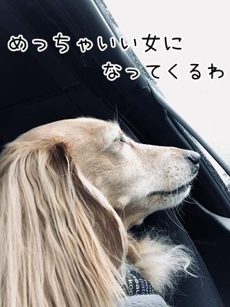 kinako10488.jpeg