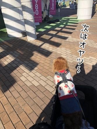 kinako10498.jpeg