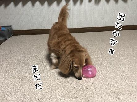 kinako10512.jpeg