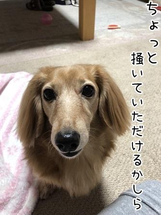 kinako10516.jpeg