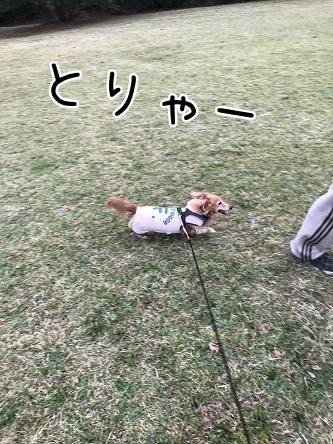 kinako10525.jpeg