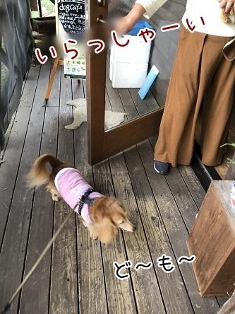 kinako10539.jpeg