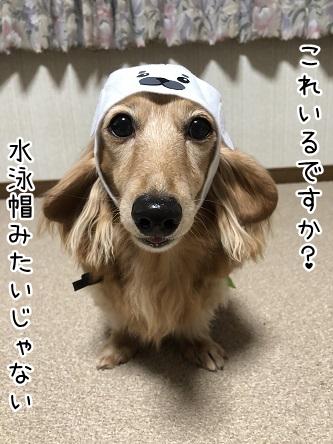 kinako10552.jpeg