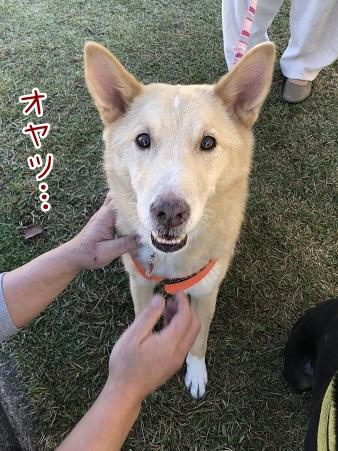 kinako10576.jpeg