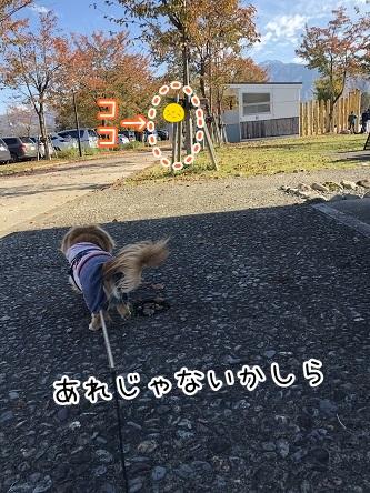 kinako10582.jpeg