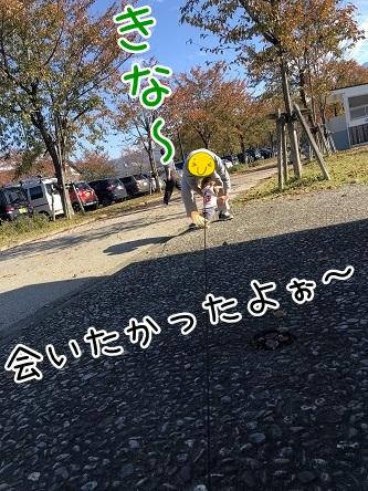 kinako10584.jpeg