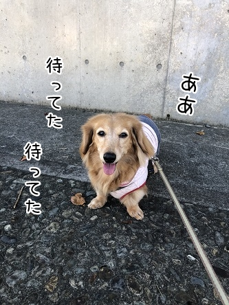 kinako10587.jpeg