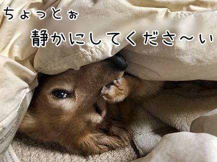 kinako10596.jpeg