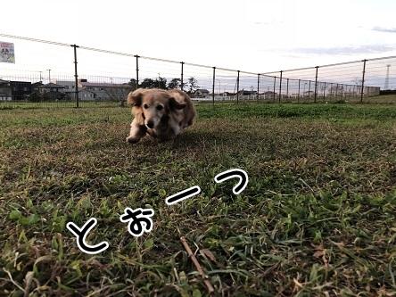 kinako10599.jpeg