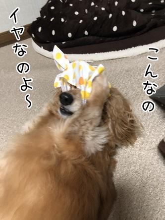 kinako10607.jpeg