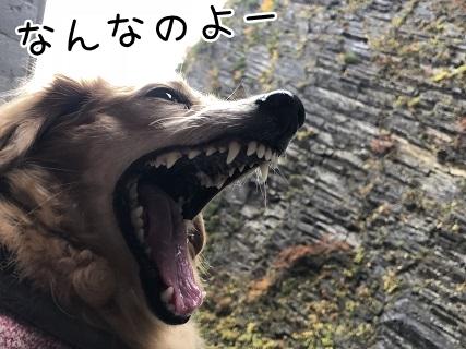 kinako10614.jpeg