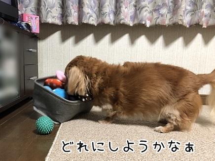 kinako10623.jpeg